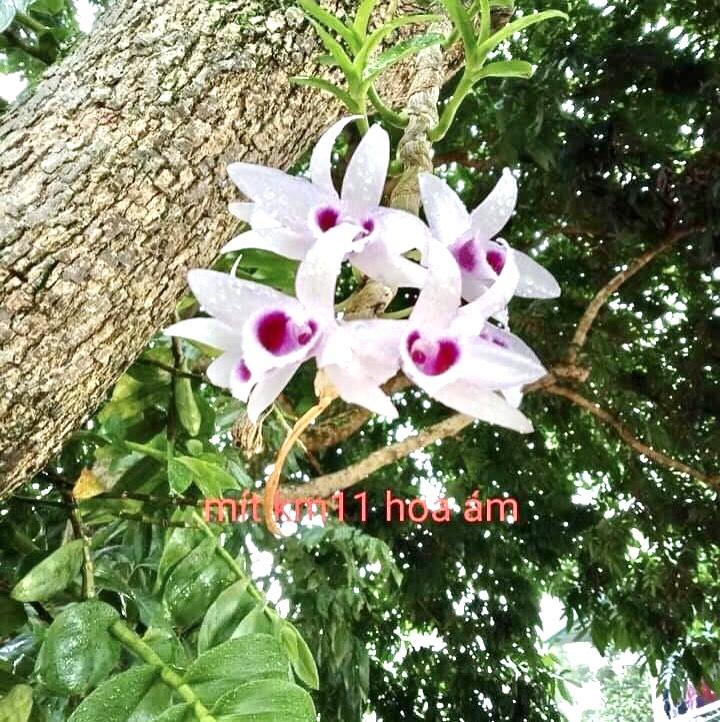 Ban Giao Xe Vinfast Vinh Phuc (10)